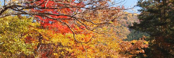 信州の秘境「遠山郷」紅葉ドライブ